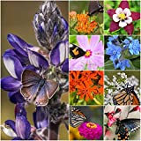 Package of 30,000 Seeds, Bird and Butterfly Wildflower Mixture (100% Pure Live Seed) Non-GMO Seeds by Seed Needs … Photo, bestseller 2018-2017 new, best price $12.50 review