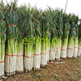 Shangdong Zhangqiu Giant Chinese Green Onion Seeds Vegetable Seeds Home Garden Bonsai Plant Chinese Vegetable Seed Photo, bestseller 2018-2017 new, best price $3.39 review