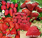 Strawberry Mix 750 Seeds Photo, bestseller 2018-2017 new, best price $10.99 review