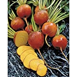 Burpee Golden Beet Seeds Photo, bestseller 2018-2017 new, best price $14.72 review