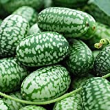 Mexican Miniature Watermelon 15 Seeds -Melothria scabra Photo, bestseller 2019-2018 new, best price $1.56 review