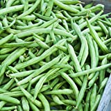 Strike Bush Bean Seeds - 1 Lb - Non-GMO, Heirloom Green Snap Bean Seeds - Vegetable Garden Seeds Photo, bestseller 2018-2017 new, best price $9.83 review