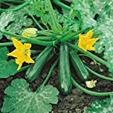 Kings Seeds - Courgette Early Gem F1 - 15 Seeds Photo, bestseller 2019-2018 new, best price $1.36 review