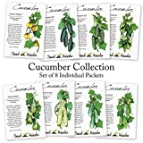 Cucumber Seed Packet Assortment (8 Individual Packets of Cucumber Seeds) Non-GMO Seeds By Seed Needs Photo, bestseller 2018-2017 new, best price $12.50 review