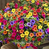 200Seeds/Pack Heirloom Hanging Petunia Mixed Seeds Color Waves Hanging Basket Petunia Beautiful Flowers Light Up Your Garden Photo, bestseller 2018-2017 new, best price $1.38 review