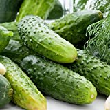 David's Garden Seeds Cucumber Pickling Boston SS30098A (Green) 50 Heirloom Seeds Photo, bestseller 2018-2017 new, best price $8.95 review
