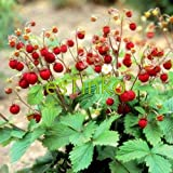 Loss Promotion! Wild Strawberry Seeds 50pcs/bag Woodland Strawberry Seeds Fruit Seeds Delicious Fruit Home Garden Bonsai Plant Photo, bestseller 2018-2017 new, best price $2.00 review