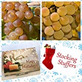 Homegrown Grape Seeds, 100, Grape 2 Bundle Muscat LaCrosse, Stocking Sized Photo, bestseller 2018-2017 new, best price $5.62 review