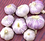 HOO PRODUCTS -100 Pcs / Bag Sterilization Vegetable Seeds Giant Garlic China Green Onion Tasty Leek Seeds Big Potted Onion Garden Bonsai Plant Hot Sale! Photo, bestseller 2018-2017 new, best price $0.80 review