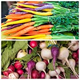 2 in 1 - Multicolour carrot and multicolour radish - SEED TAPE - seeds Photo, bestseller 2019-2018 new, best price $7.10 review