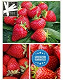 Organic Honeoye Strawberry 315 Seeds Upc 600188190847 + 1 Free Plant Marker Photo, bestseller 2018-2017 new, best price $5.24 review