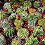 Outsidepride Succulent Cactus Plant Seed Mix - 1000 seeds Photo, bestseller 2019-2018 new, best price $6.49 review