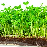 "Microgreen Organic Pea Shoot 3 Pack Refill–Pre-measured Soil + Seed, Use with Window Garden Multi-Use 15"" x 6"" Planter Tray. Easy and Convenient, Enough to Sprout 3 Crops of Superfood. Photo, bestseller 2018-2017 new, best price $12.99 review"