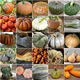 HEIRLOOM NON GMO French Pumpkin Mix 15 Seeds Photo, bestseller 2018-2017 new, best price $2.99 review