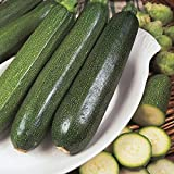 Courgette - All Green Bush - 25 Seeds Photo, bestseller 2018-2017 new, best price $1.39 review