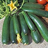 Kings Seeds - Courgette Zucchini - 20 Seeds Photo, bestseller 2018-2017 new, best price $1.63 review