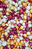 MIX, Red,Yellow,White,Onion Sets , (40 Bulbs) Garden Vegetable Photo, bestseller 2018-2017 new, best price $8.99 review