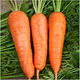 Package of 800 Seeds, Royal Chantenay Carrot (Daucus carota) Non-GMO Seeds by Seed Needs Photo, bestseller 2018-2017 new, best price $3.65 review