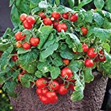 David's Garden Seeds Tomato Currant Tiny Tim OS961G (Red) 50 Non-GMO, Heirloom Seeds Photo, bestseller 2019-2018 new, best price $8.95 review