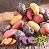 Organic Potato Medley Mix - 10 Seed Potatoes Mixed Colors Red, Purple and Yellow! Photo, bestseller 2018-2017 new, best price $9.65 review
