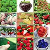 New 12 Packs Different Strawberry Seeds Photo, bestseller 2018-2017 new, best price $4.94 review