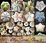 Astrophytum Hybrids Cactus Succulent Seeds - Sand Dollar Cactus, Sea Urchin Cactus - HIGHLY DESIRABLE & SOUGHT AFTER - Gorgeous Patterns and Markings - FRESH SEEDS - By MySeeds.Co (0100 Seeds - 100 Seeds) Photo, bestseller 2018-2017 new, best price $18.95 review