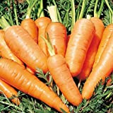 Danvers Half Long Carrot 600 Seeds (Non-Gmo) Upc 646263362242 + 2 Plant Markers Photo, bestseller 2017-2016 new, best price $5.25 review
