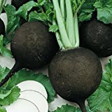 Everwilde Farms - 500 Black Spanish Round Radish Seeds - Gold Vault Jumbo Seed Packet Photo, bestseller 2019-2018 new, best price $2.50 review