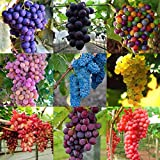 500 grape seeds, all without transgene,panago Photo, bestseller 2018-2017 new, best price $9.97 review