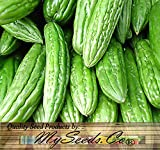 BIG PACK - (50) Japanese Extra Long BITTER MELON Seeds - Non-GMO Seeds by MySeeds.Co (BIG PACK - Japanese Bitter Melon LONG) Photo, bestseller 2018-2017 new, best price $18.95 review