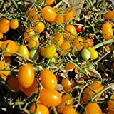 Very Sweet Yellow Grape Tomato! 20 Seeds! LOW ACID! Photo, bestseller 2018-2017 new, best price $2.99 review