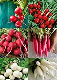 David's Garden Seeds Collection Set Radish RSL135 (Multi) 6 Varieties 2000 Plus Seeds (Open Pollinated, Heirloom, Organic) Photo, bestseller 2018-2017 new, best price $17.95 review
