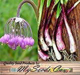 NODDING PINK ONION FLOWER SEEDS - Allium cernuum - Edible Perennial Cold Hardy Zones 3-9 - By MySeeds.Co (BIG PACK (1,000 Seeds)) Photo, bestseller 2018-2017 new, best price $13.95 review