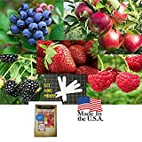 Fruit Combo Pack Raspberry, Blackberry, Blueberry, Strawberry, Apple (Organic) 975+ Seeds UPC 600188190656 & 5 Plant Markers (+Free Carnations) Photo, bestseller 2018-2017 new, best price $8.03 review