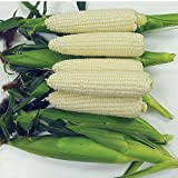David's Garden Seeds Corn Sweet Sugar Pearl SL112 (White) 100 Hybrid Seeds Photo, bestseller 2018-2017 new, best price $8.45 review