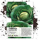 Seed Needs, Early Round Dutch Cabbage (Brassica oleracea) 300 Seeds Non-GMO Photo, bestseller 2019-2018 new, best price $3.65 review