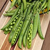 David's Garden Seeds Pea Green Arrow SL2040 (Green) 100 Organic Heirloom Seeds Photo, bestseller 2018-2017 new, best price $8.75 review