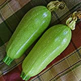 Kings Seeds - Courgette Clarion F1 (Lebanese Type) - 15 Seeds Photo, bestseller 2017-2016 new, best price $1.84 review