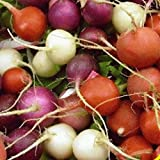 Everwilde Farms - 300 Easter Egg Radish Seeds - Gold Vault Jumbo Seed Packet Photo, bestseller 2018-2017 new, best price $2.50 review