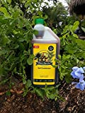 Nature's Super Grow for Plants 32 Oz Concentrate Amazing Plant Growth, Equals to 100 Gallons! Proven to Work Wonders on All Plants, Trees and Shrubs, Flowers, Roses, Fruits Photo, bestseller 2018-2017 new, best price $14.97 review