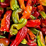 David's Garden Seeds Pepper Chili Anaheim Chile SL112AB (Green) 50 Organic Heirloom Seeds Photo, bestseller 2018-2017 new, best price $8.45 review