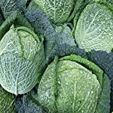 Everwilde Farms - 500 Savoy Cabbage Seeds - Gold Vault Jumbo Seed Packet Photo, bestseller 2018-2017 new, best price $2.50 review