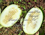Rare Seeds! Cucumeropsis mannii Egusi-itoo African Melon 10 Seed is used for Oil Photo, bestseller 2019-2018 new, best price $13.99 review