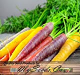BIG PACK x Organic Rainbow Mix Carrot (1,000+) Seeds - Atomic Red, Bambino Orange, Cosmic Purple, Lunar White and Solar Yellow - By MySeeds.Co Photo, bestseller 2017-2016 new, best price $10.95 review