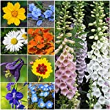 Bulk Package of 30,000 Seeds, Partial Shade Wildflower Mixture (15 Species) Non-GMO Seeds By Seed Needs Photo, bestseller 2017-2016 new, best price $12.50 review