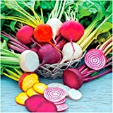 Package of 600 Seeds, Rainbow Mixed Beets (Beta vulgaris) Non-GMO Seeds By Seed Needs Photo, bestseller 2018-2017 new, best price $3.65 review