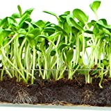 "Microgreen Organic Sunflower 3 Pack Refill – Pre-measured Soil + Seed, Use with Window Garden Multi-Use 15"" x 6"" Planter Tray. Easy and Convenient, Enough to Sprout 3 Crops of Superfood. Photo, bestseller 2017-2016 new, best price $11.99 review"