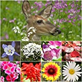 Bulk Package of 30,000 Seeds, Deer Resistant Wildflower Mixture (100% Pure Live Seed) Non-GMO Seeds by Seed Needs … Photo, bestseller 2018-2017 new, best price $12.50 review